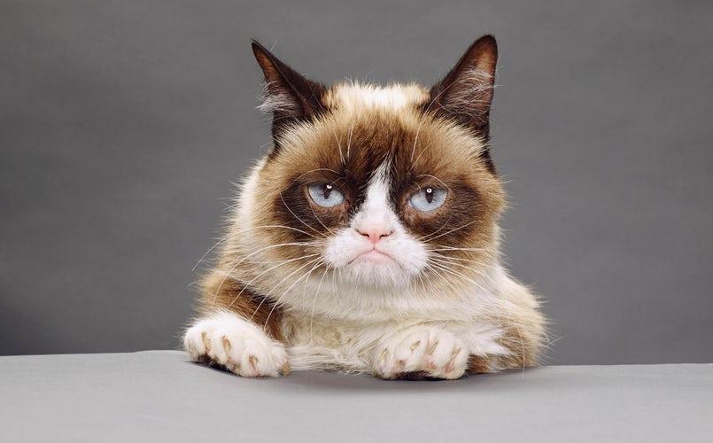 covid gatto